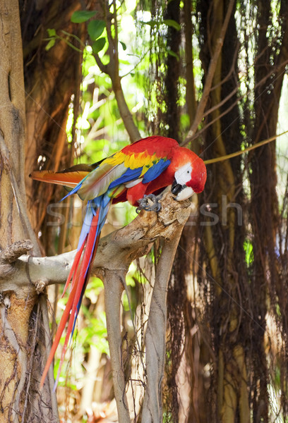 Stock photo: Colorful parrot sitting on the tree
