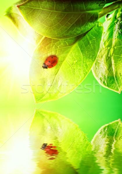 Katicabogár ül zöld levél renderelt víz tavasz Stock fotó © Nejron