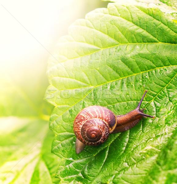 Photo stock: Escargot · séance · feuille · verte · résumé · nature