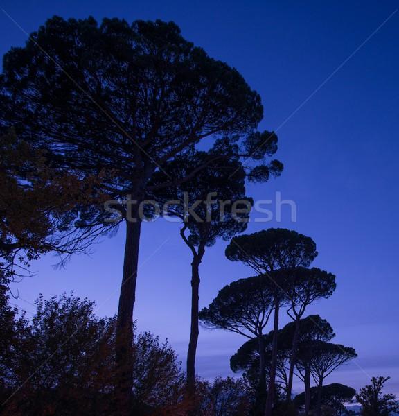 Trees over night sky Stock photo © Nejron