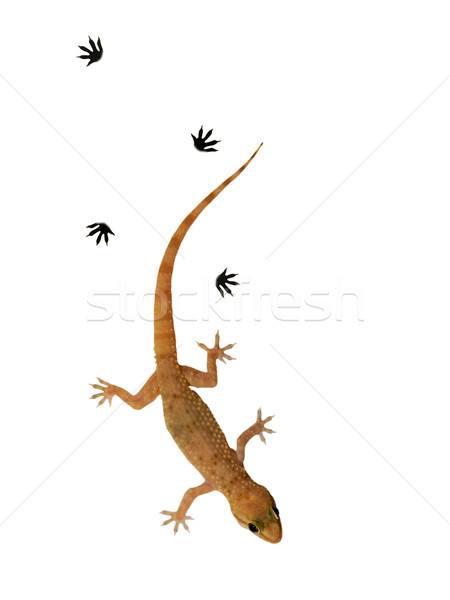 Small lizard over white background Stock photo © Nejron