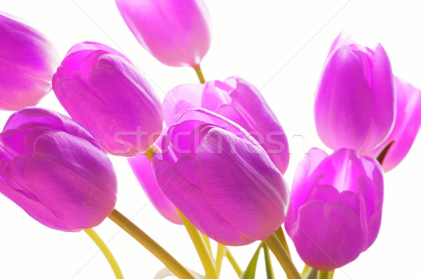 Bunch of flowers Stock photo © Nejron