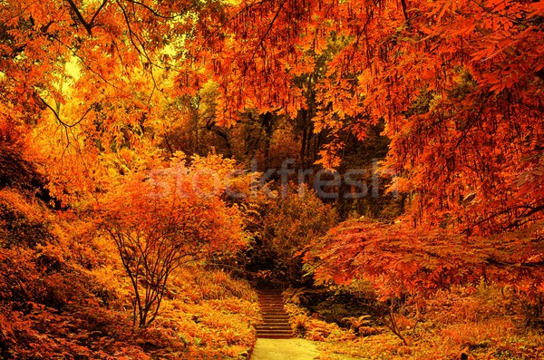 Stair in a autumn park. Stock photo © Nejron