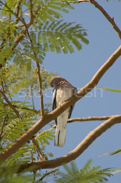 Nem leírás fa kék madarak vicces Stock fotó © Nejron