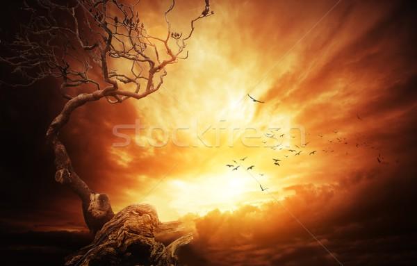 Foto stock: Velho · árvore · tempestuoso · céu · noite · outono