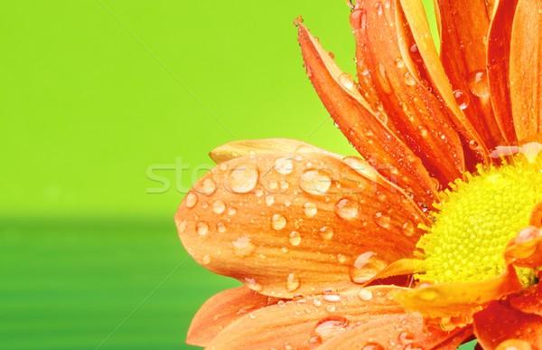 Stok fotoğraf: Turuncu · çiçek · su · damlası · su · doku · soyut
