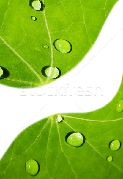 Green leaf with water drops on it Stock photo © Nejron