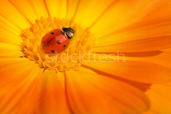 Mariquita sesión flor jardín verano solo Foto stock © Nejron