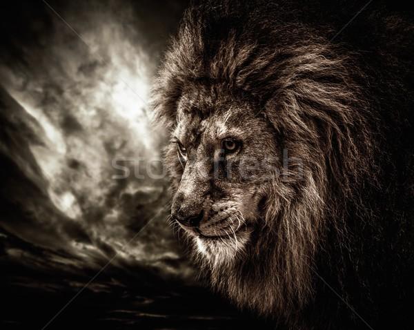 Leão tempestuoso céu nuvens boca África Foto stock © Nejron