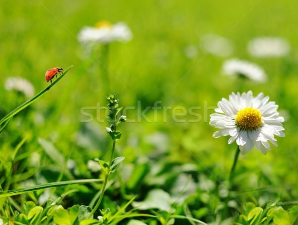 Senhora bicho sessão folha verde primavera verão Foto stock © Nejron