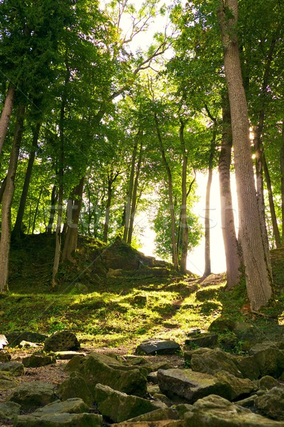 Sunshine in a forest. Stock photo © Nejron
