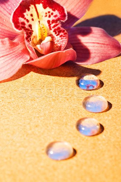 ピンク 蘭 露 値下がり 花弁 クローズアップ ストックフォト © Nejron