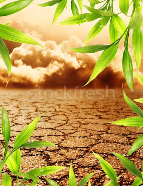 Dead soil with floral border around Stock photo © Nejron