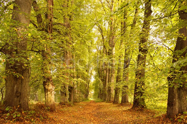 Alley in a autumn forest. Stock photo © Nejron