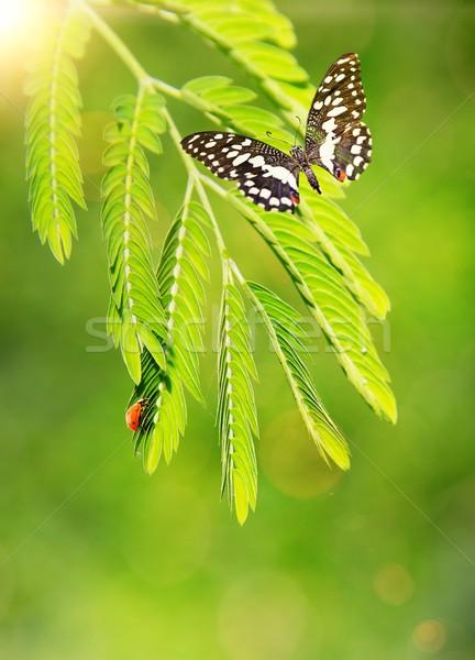 Katicabogár pillangó zöld levél fa tavasz nap Stock fotó © Nejron