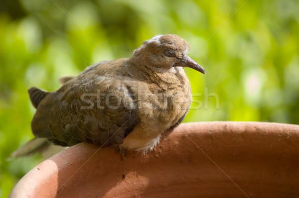 Nem leírás zöld madarak szabadság szárnyak Stock fotó © Nejron