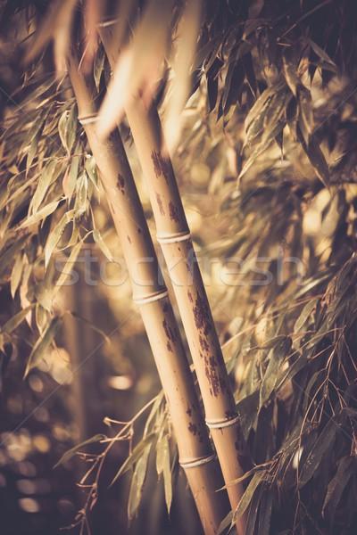 Foto bambù impianto abstract foglia giardino Foto d'archivio © Nejron