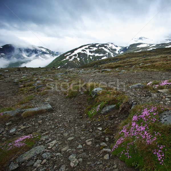 Rocky surface in norway mountains Stock photo © Nejron