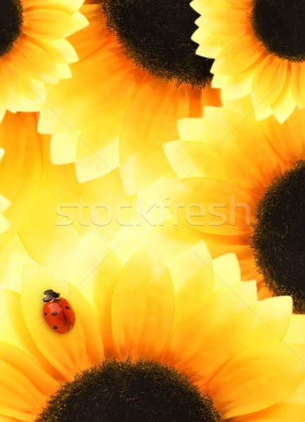 Uğur böceği oturma ayçiçeği çiçek soyut doğa Stok fotoğraf © Nejron