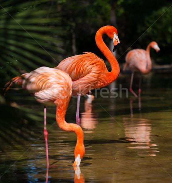 Csoport rózsaszín víz fa természet szépség Stock fotó © Nejron