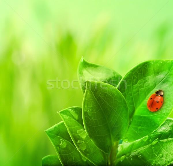 Coccinelle séance feuille verte herbe nature fond Photo stock © Nejron