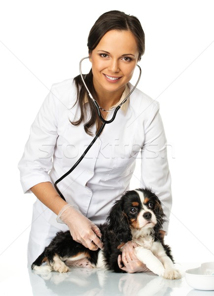 Young positive brunette veterinary woman holding spaniel with wounded leg  Stock photo © Nejron