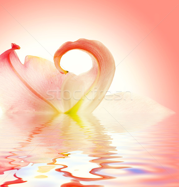 Elegant lily flower reflected in rendered water Stock photo © Nejron