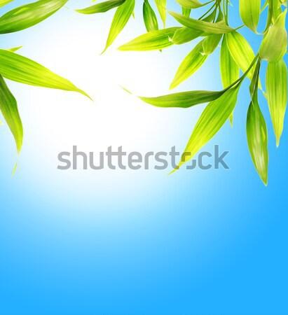 Bambusz levelek kék ég égbolt fa tavasz Stock fotó © Nejron