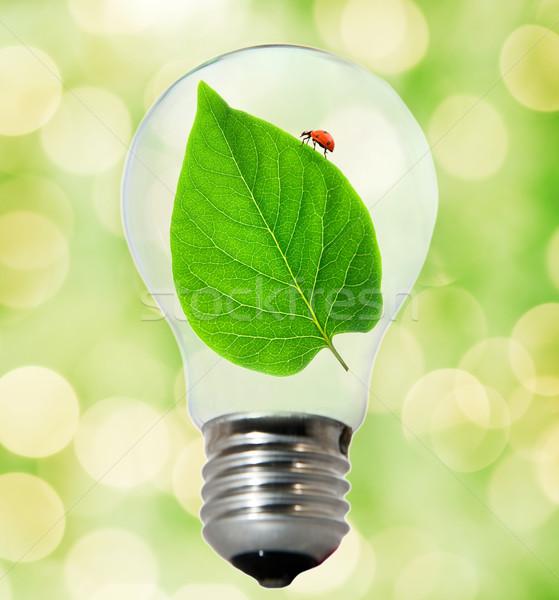 Milieu vriendelijk lamp wereldbol natuur licht Stockfoto © Nejron