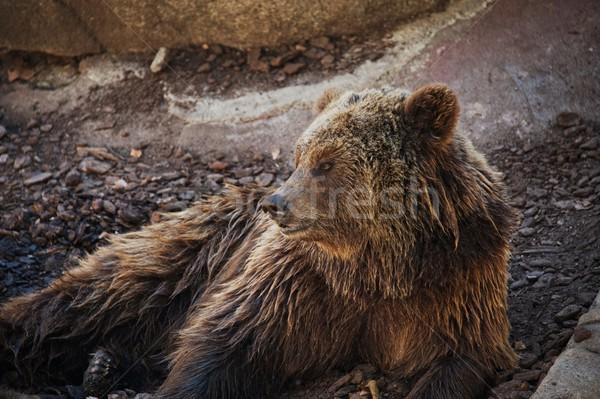 Bruine beer gezicht hout ogen natuur Stockfoto © Nejron