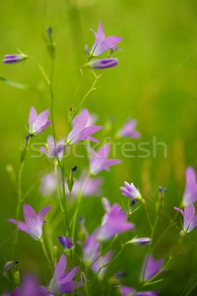 Stockfoto: Paars · bloemen · abstract · tuin · achtergrond