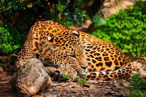 Káprázatos természetes élőhely természet zöld Afrika Stock fotó © Nejron