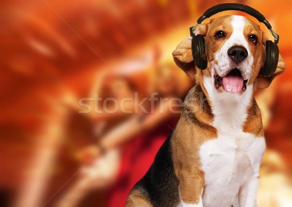 Beagle cane indossare cuffie discoteca abstract Foto d'archivio © Nejron