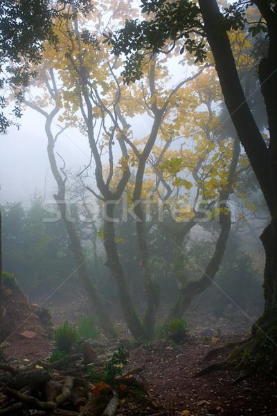 тумана лес закат пейзаж красоту синий Сток-фото © Nejron