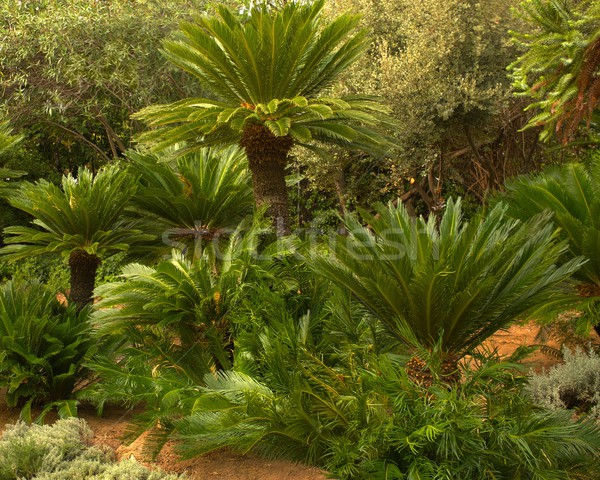Beautiful tropical forest. Stock photo © Nejron