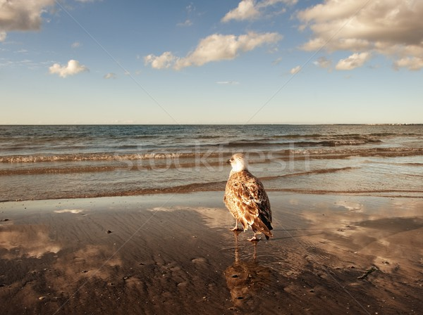 Gabbiano spiaggia cielo acqua mare estate Foto d'archivio © Nejron