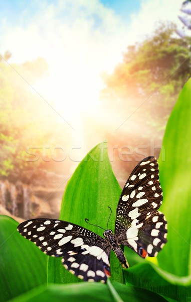 Beautiful butterfly over waterfall in wild forest Stock photo © Nejron