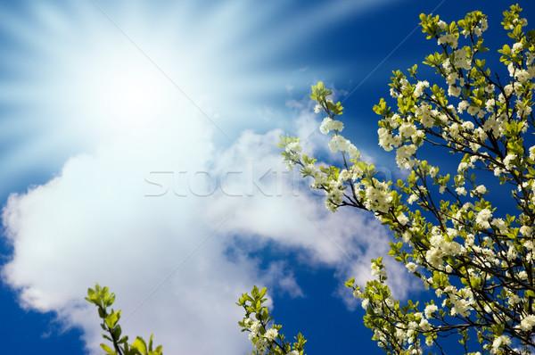 夏 風光明媚な 雲 太陽 自然 葉 ストックフォト © Nejron