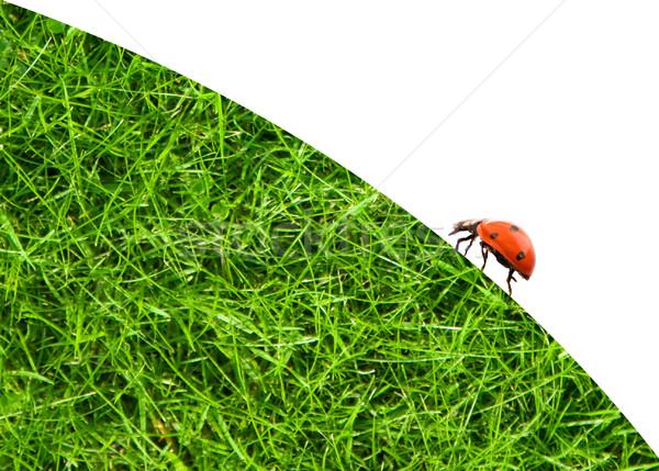 Coccinelle séance herbe verte herbe résumé fond Photo stock © Nejron