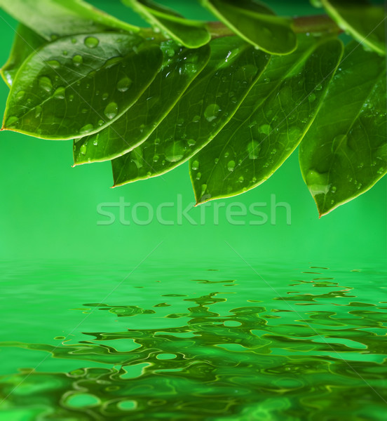 Green leaves reflected in water Stock photo © Nejron