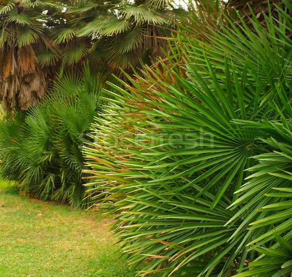 Tropical plants in a park. Stock photo © Nejron