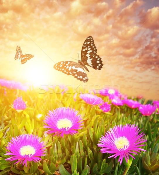 Papillons champ de fleurs printemps papillon nature été Photo stock © Nejron