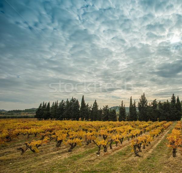 美しい 畑 風景 表示 ツリー ワイン ストックフォト © Nejron