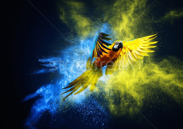 Flying Ara parrot over colourful powder explosion  Stock photo © Nejron