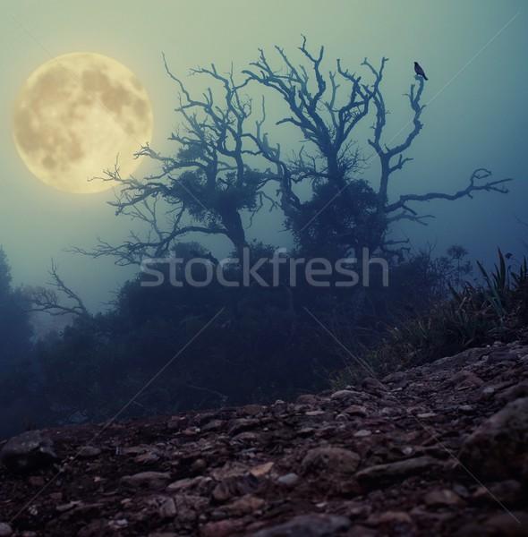 Stock photo: Old spooky tree