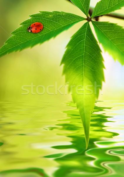 Katicabogár ül zöld levél renderelt víz fény Stock fotó © Nejron