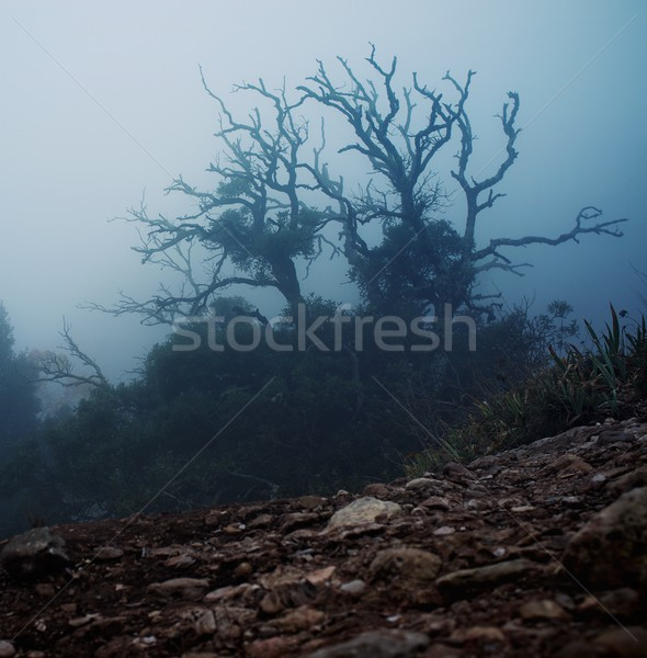 Old spooky tree  in the morning Stock photo © Nejron