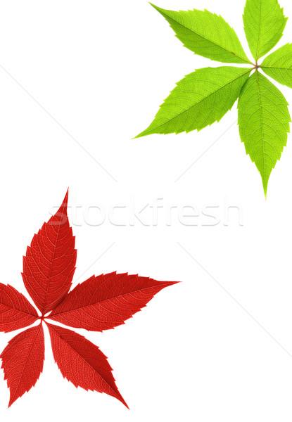 Rosso foglia verde confine abstract natura design Foto d'archivio © Nejron