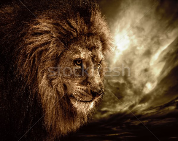 Stock photo: Lion against stormy sky