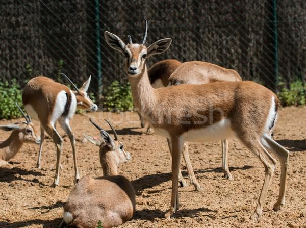 группа зоопарке глаза лице глазах пустыне Сток-фото © Nejron